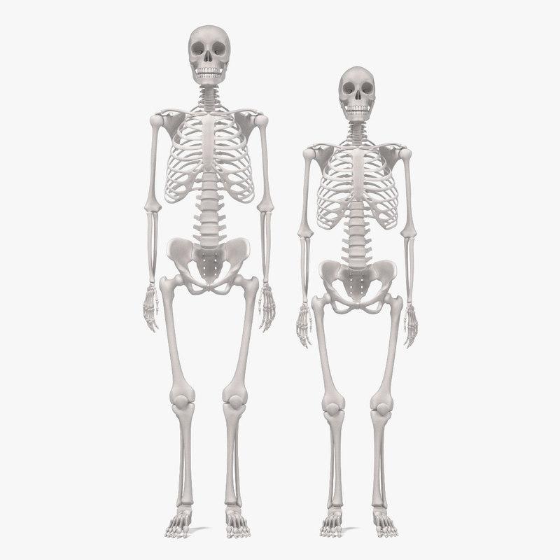 male female skeletons 3d blend