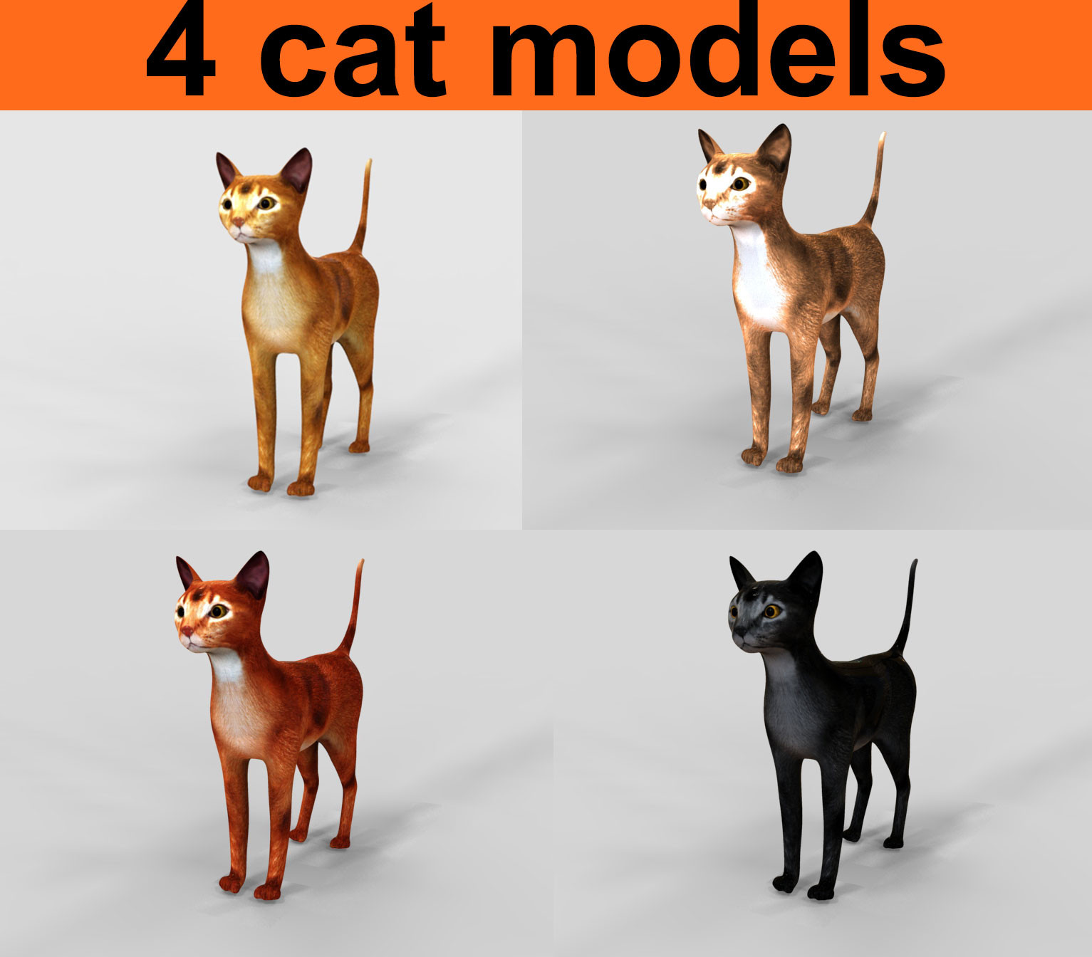 cat01.109.jpg