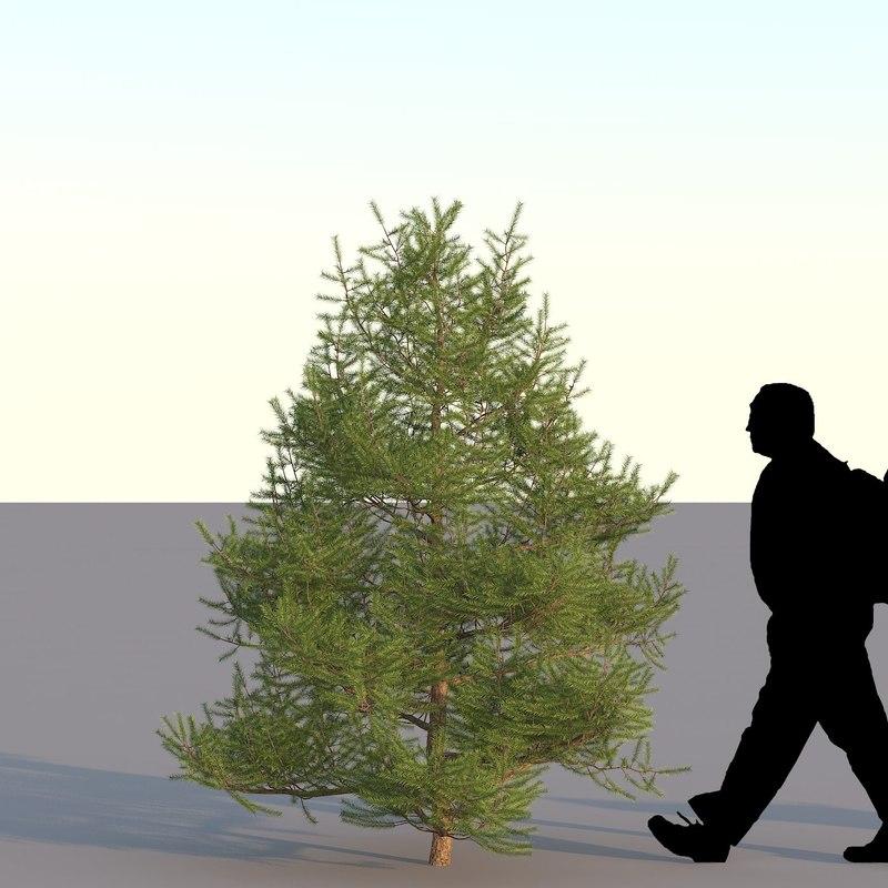 spruce_02m01_0000.jpg