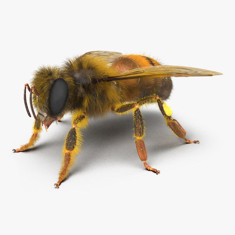 Bee 3d model 00.jpg