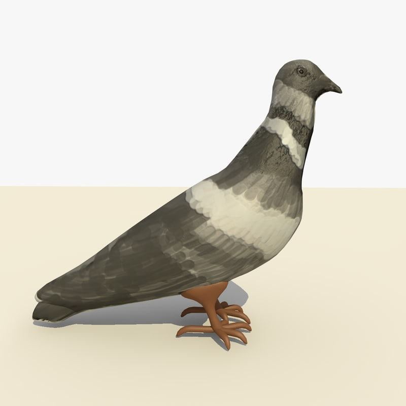 SINGLE PIGEON STANDG 1.jpg