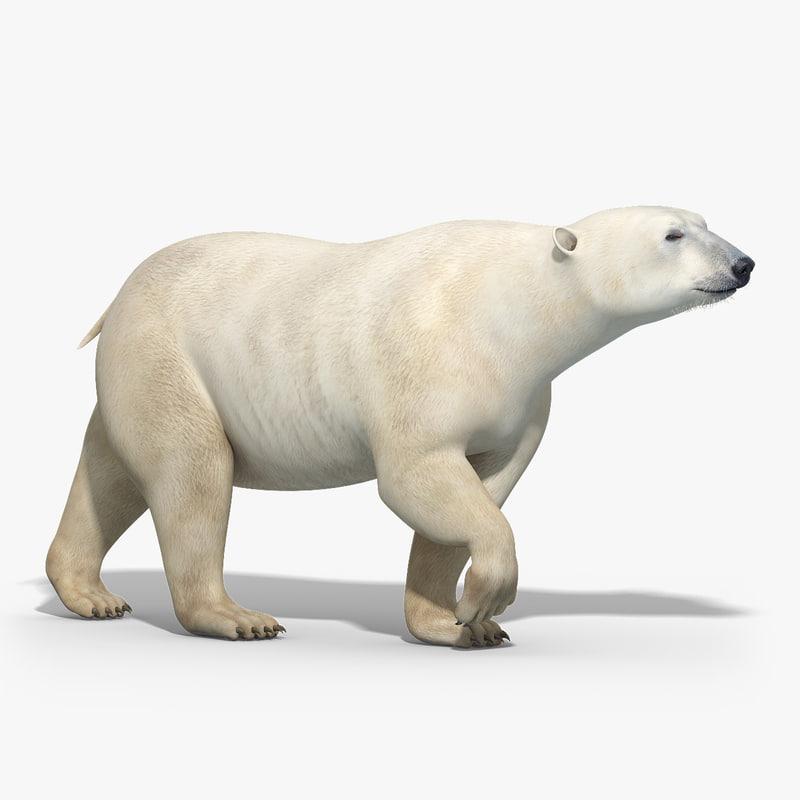 polar_bear_MODEL_RIGGED_01.jpg