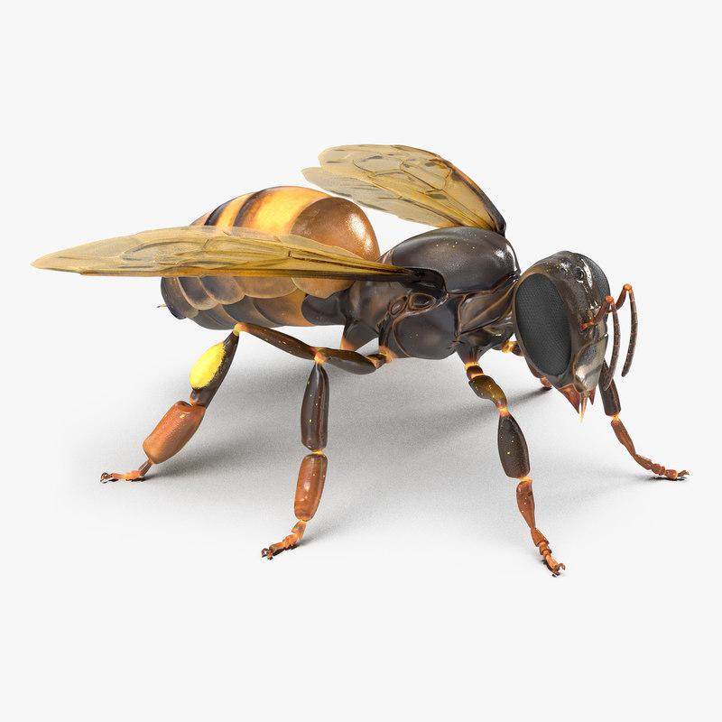 Honey Bee 3d model 00.jpg