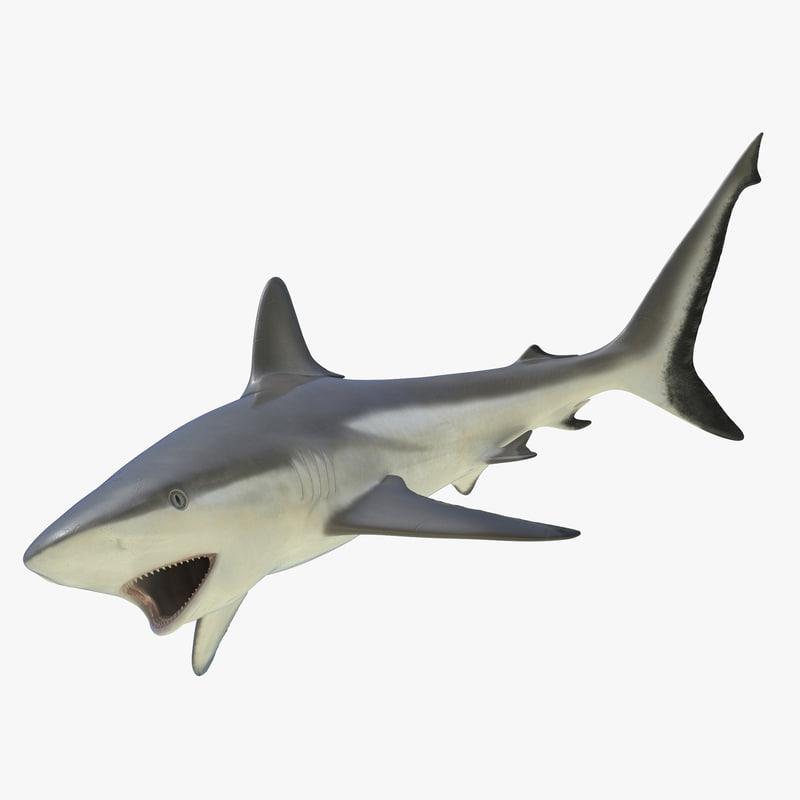 Grey Reef Shark Rigged 3d model 01.jpg