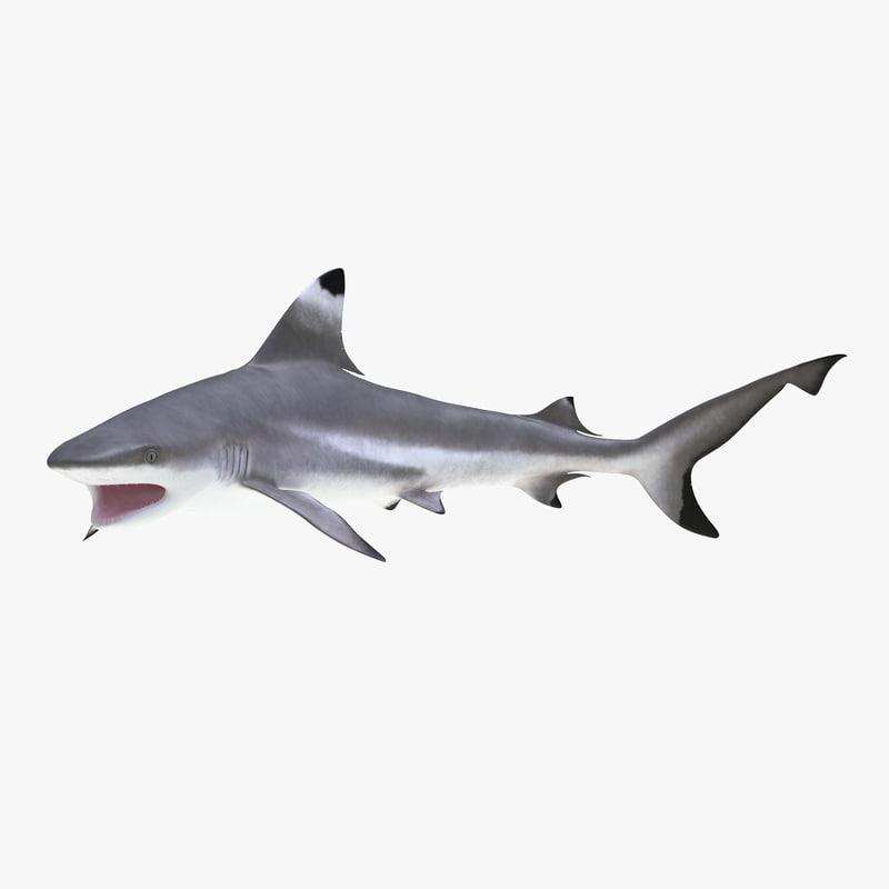 3d model of Blacktip Reef Shark 01.jpg