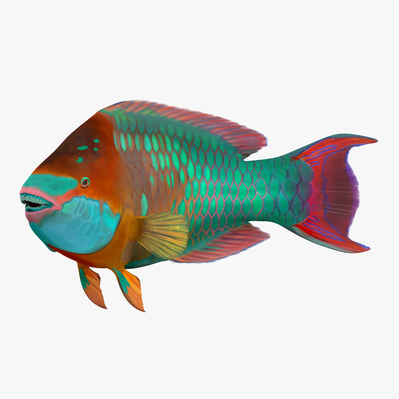 Rainbow parrot fish pose 3d model for Rainbow parrot fish