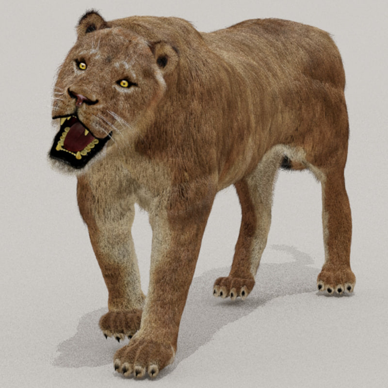 lioness cover.jpg