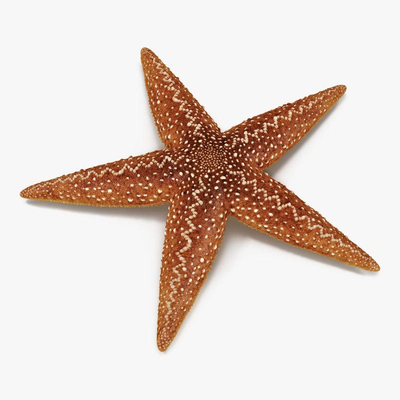 starfish 2 3d max