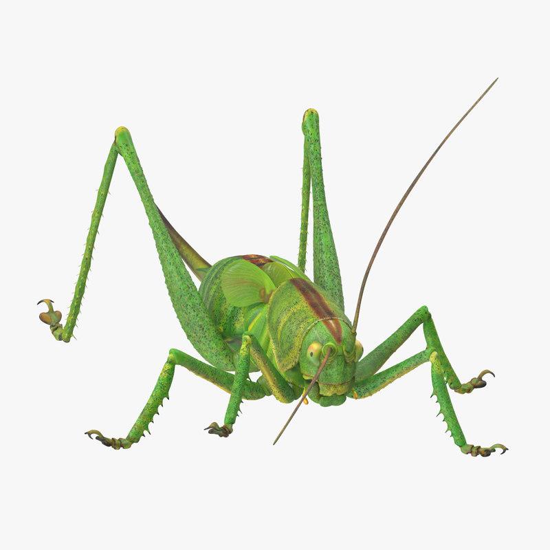 Grasshopper_01_001_Thumbnail_Square0000.jpg