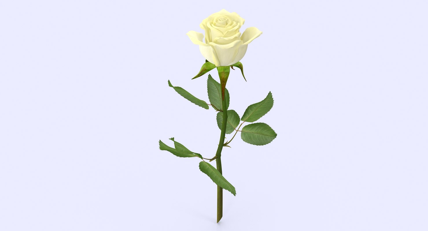 rose4_1_1.jpg