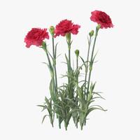 carnation 3D models
