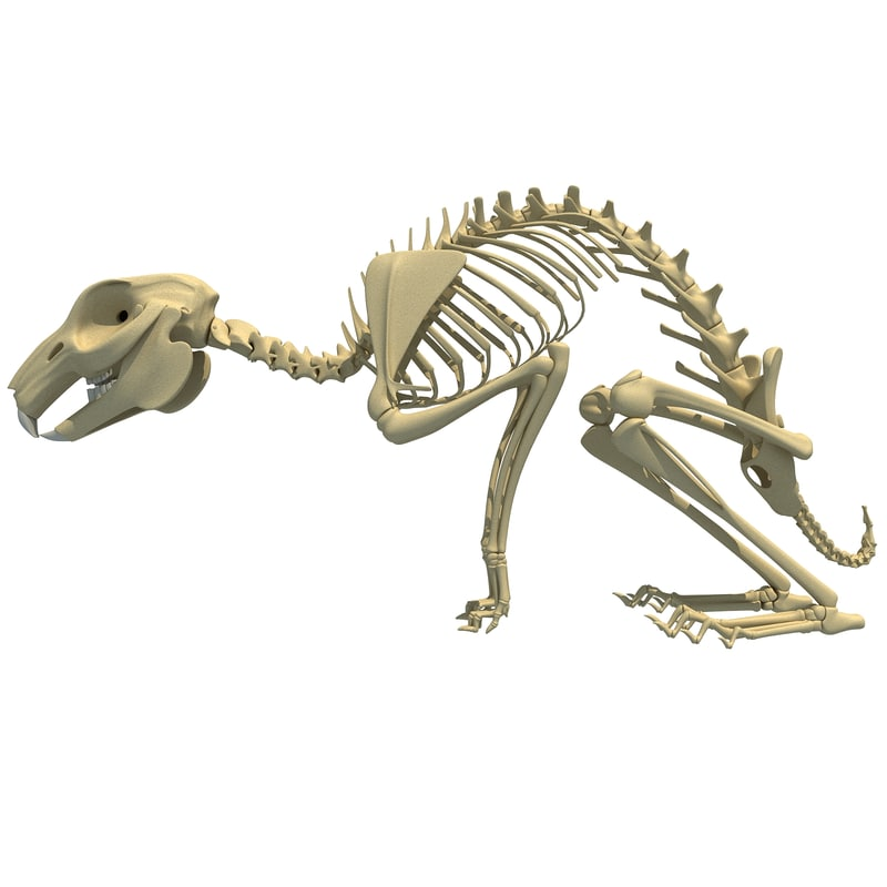 Veterinary anatomy models