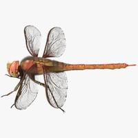 dragonfly 3D models
