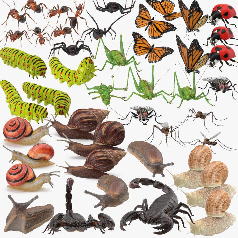 Arthropods_Mollusks_Collection_001.jpg