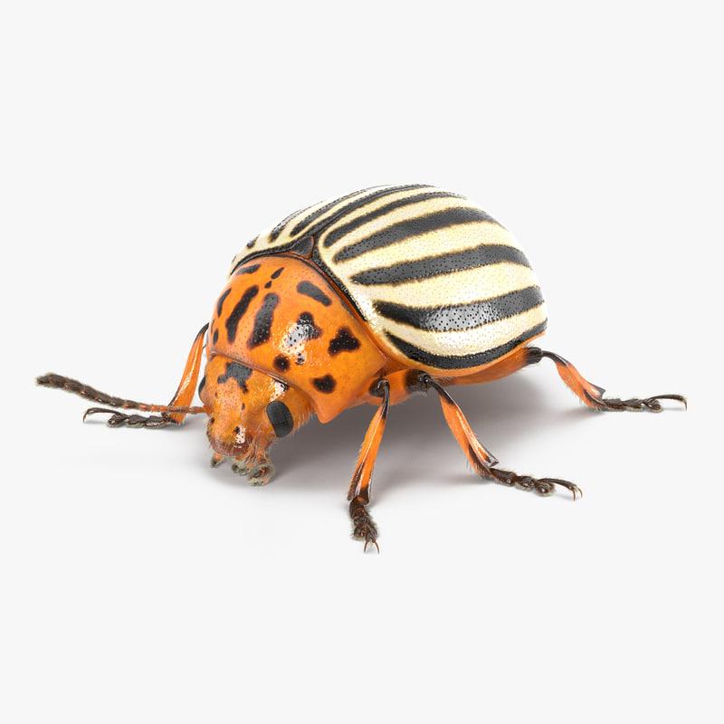 Colorado Potato Beetle 3dsmax vray 3d model 01.jpg