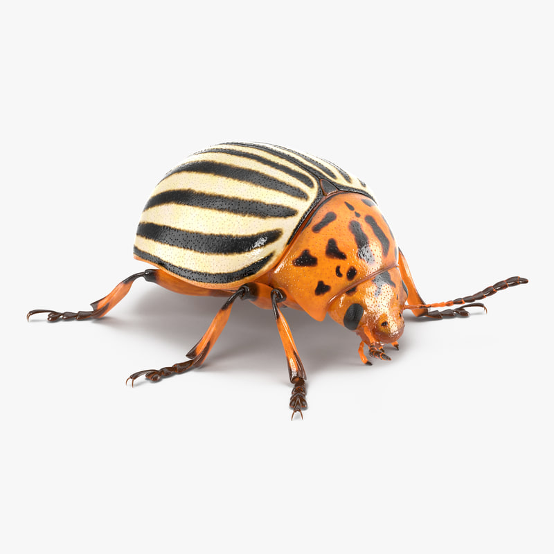 Colorado Potato Beetle 3d 3ds