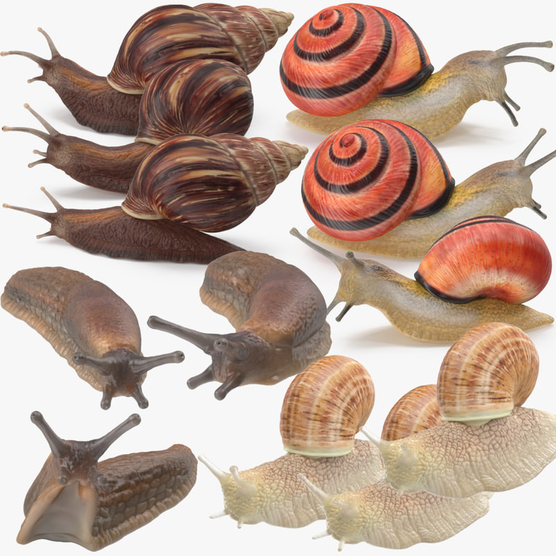 Snails_Collection_001.jpg