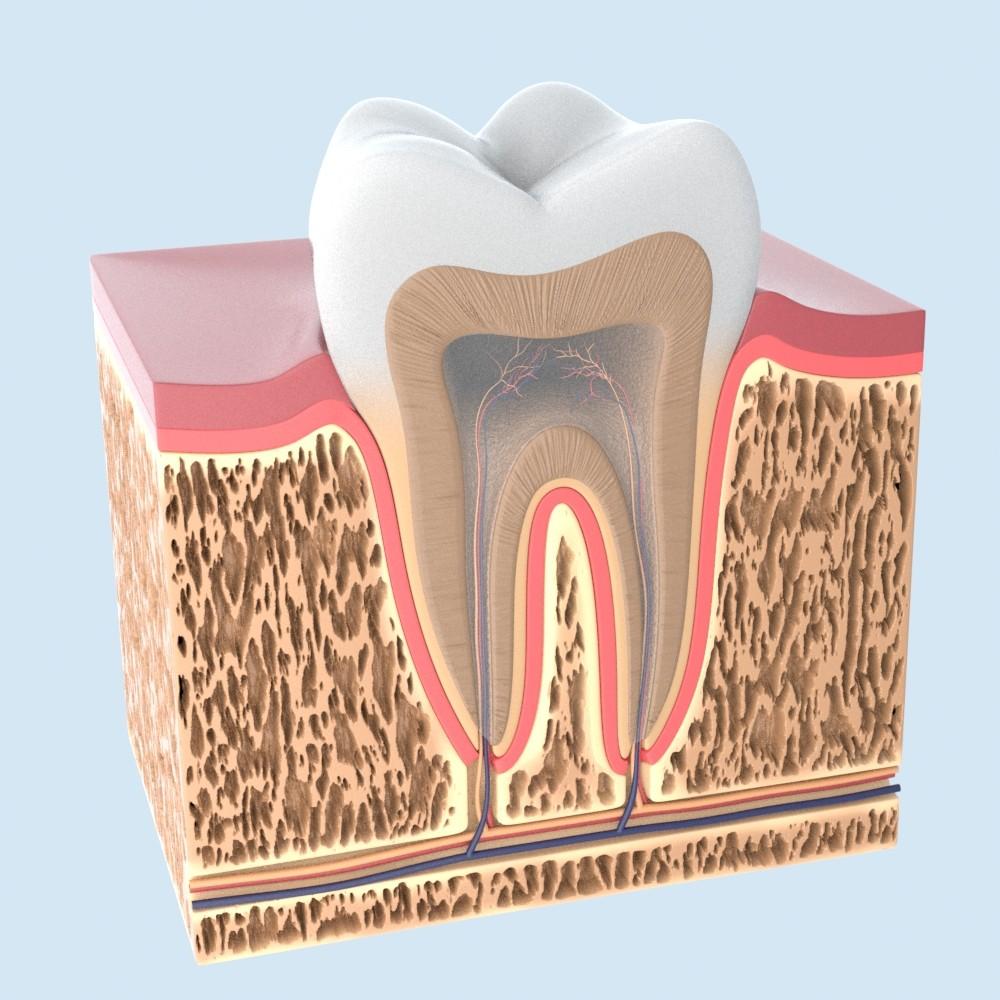 tooth_01.JPG