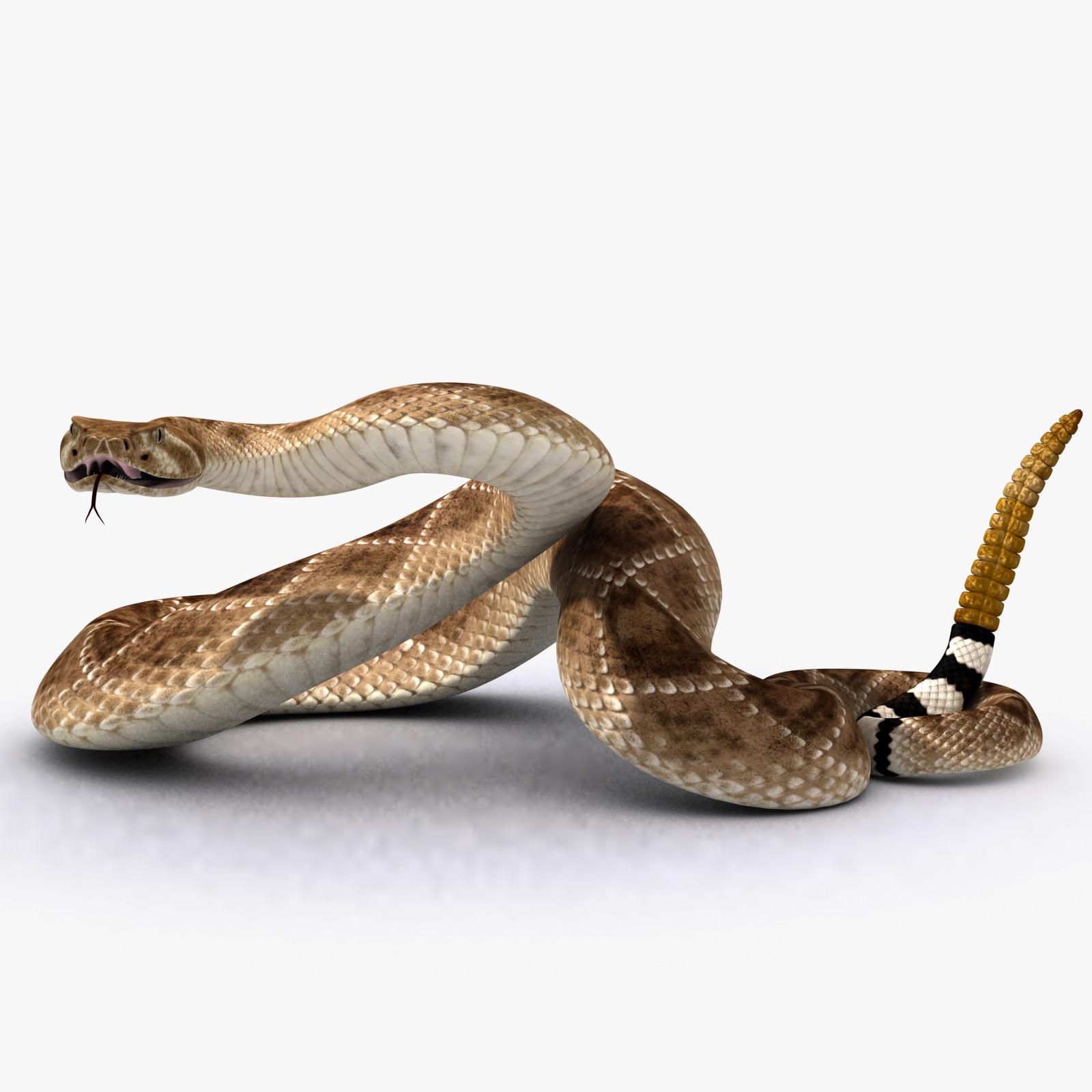 Rattlesnake_000.png