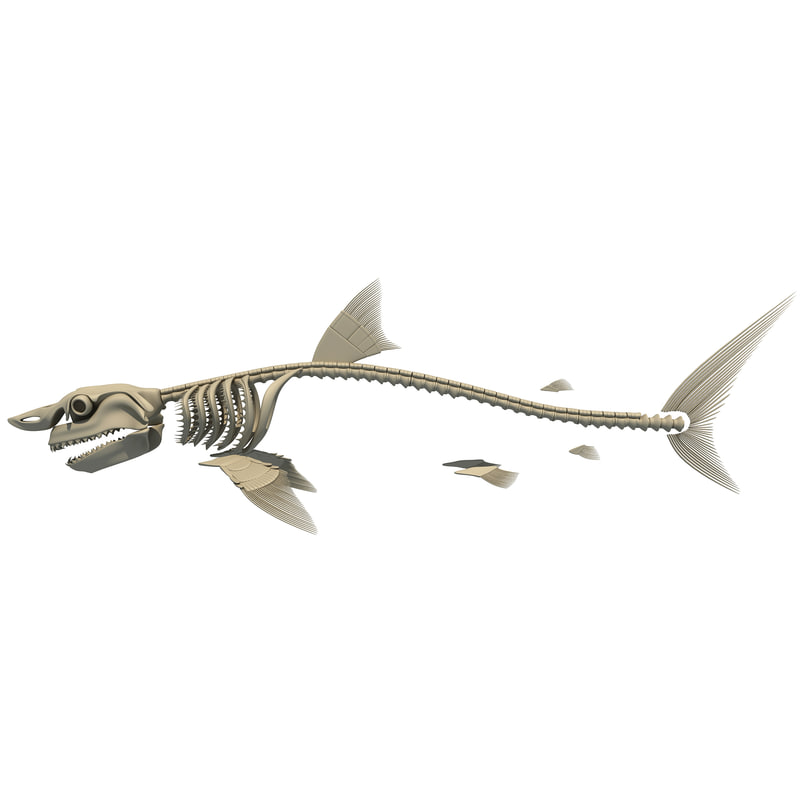 Shark-skeleton- (1).jpg