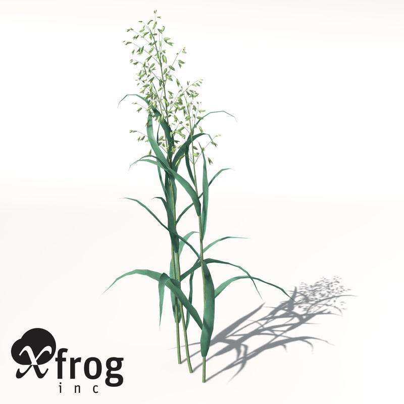 AG01-oats-7.jpg