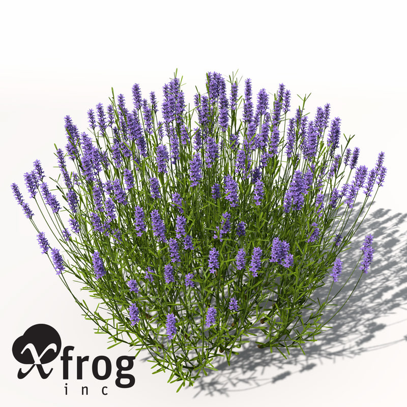 AG11-lavender-4.jpg