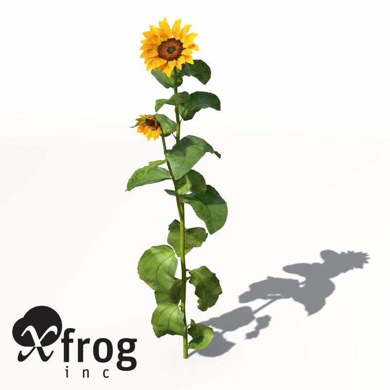 HG14-sunflower-8.jpg