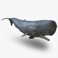 Sperm Whale 3D models