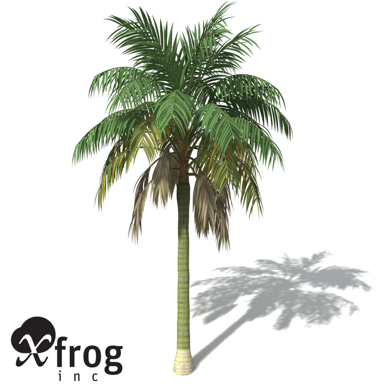 OC13-kentia-palm-7.jpg