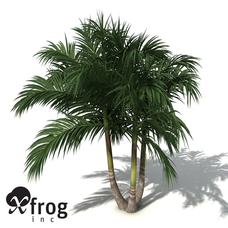 OC25-bangalow-palm-4.jpg