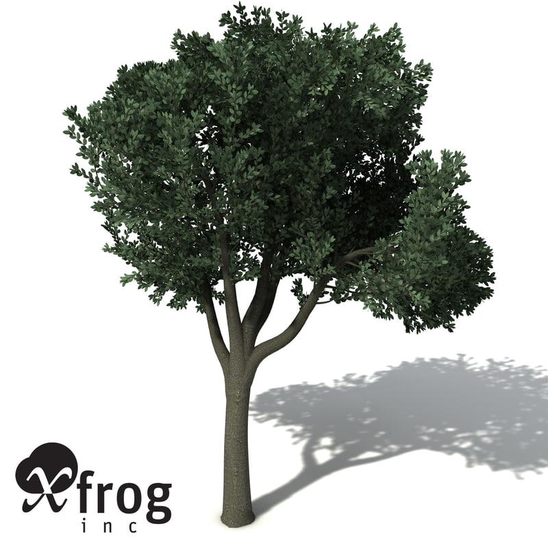 OC35-rusty-fig-6.jpg