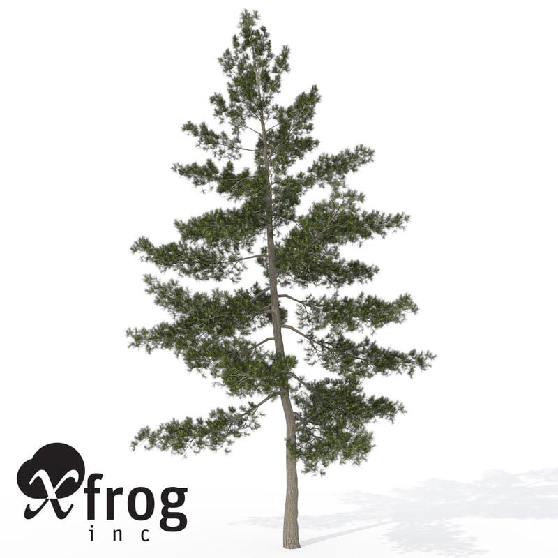EA12a-eastern-white-pine.jpg