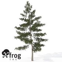 Japanese White pine 3D models