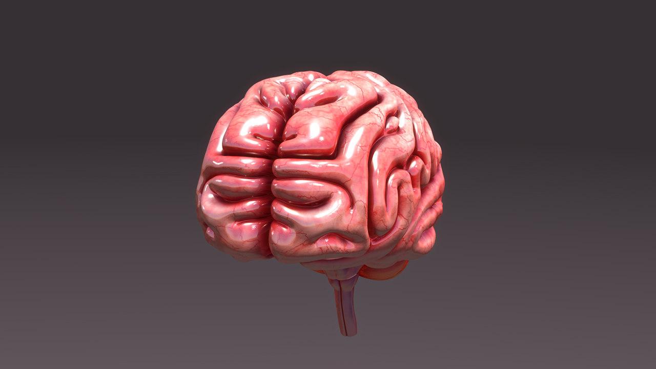 B0006 Brain_Full_aerial.jpg