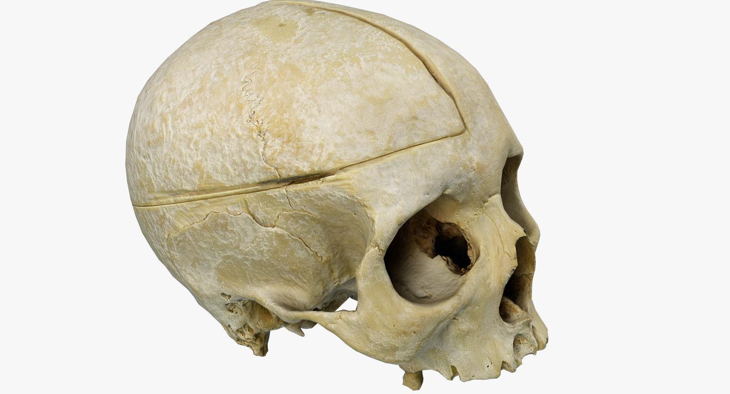 skull_human_1480_800w.jpg