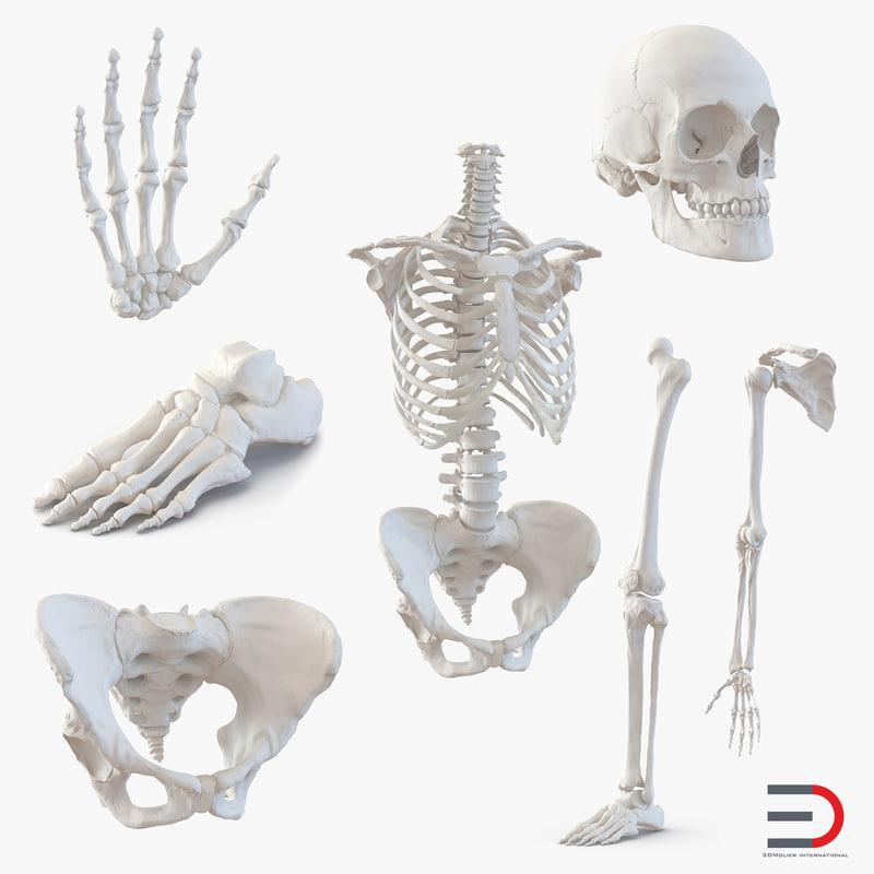 Female Skeleton Collection 3d models 001.jpg