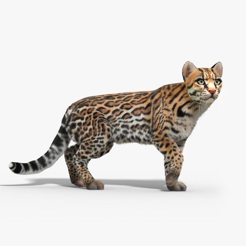 Ocelot Cat Fur Rigged 3d Max