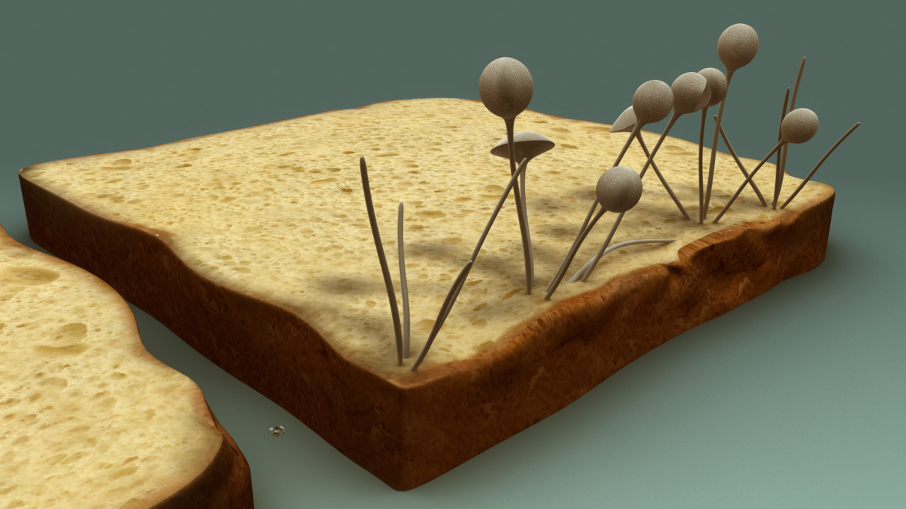 B0186 Fungi_1_back.0001.jpg
