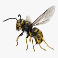 wasp 3D models