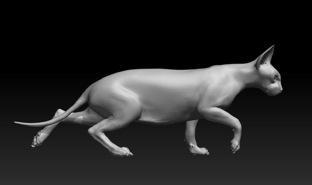 sphynx cat.JPG
