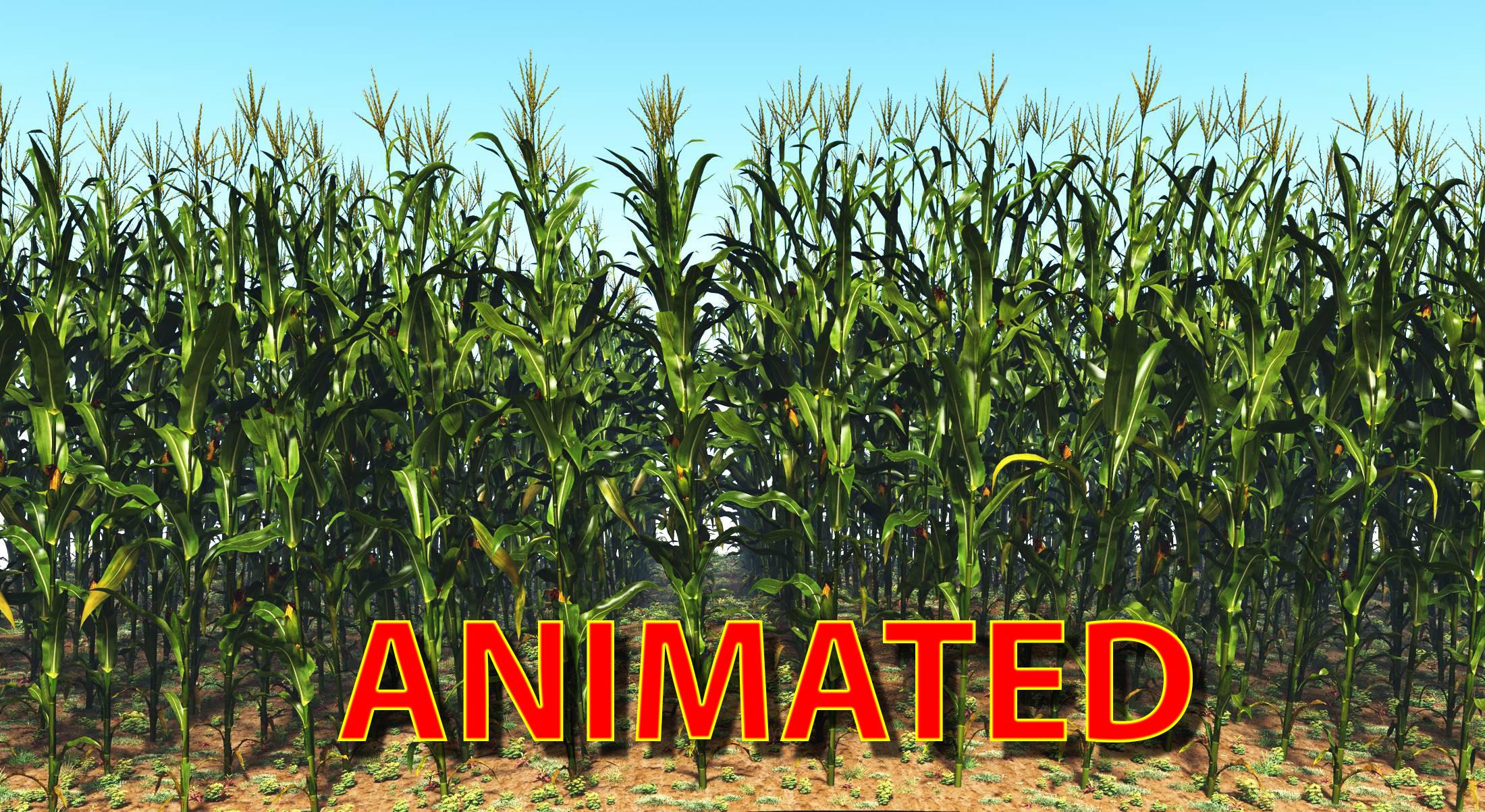 1 animated.jpg