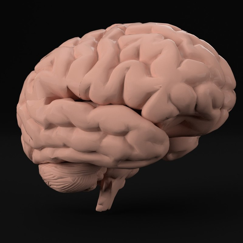 HumanBrain---00.jpg