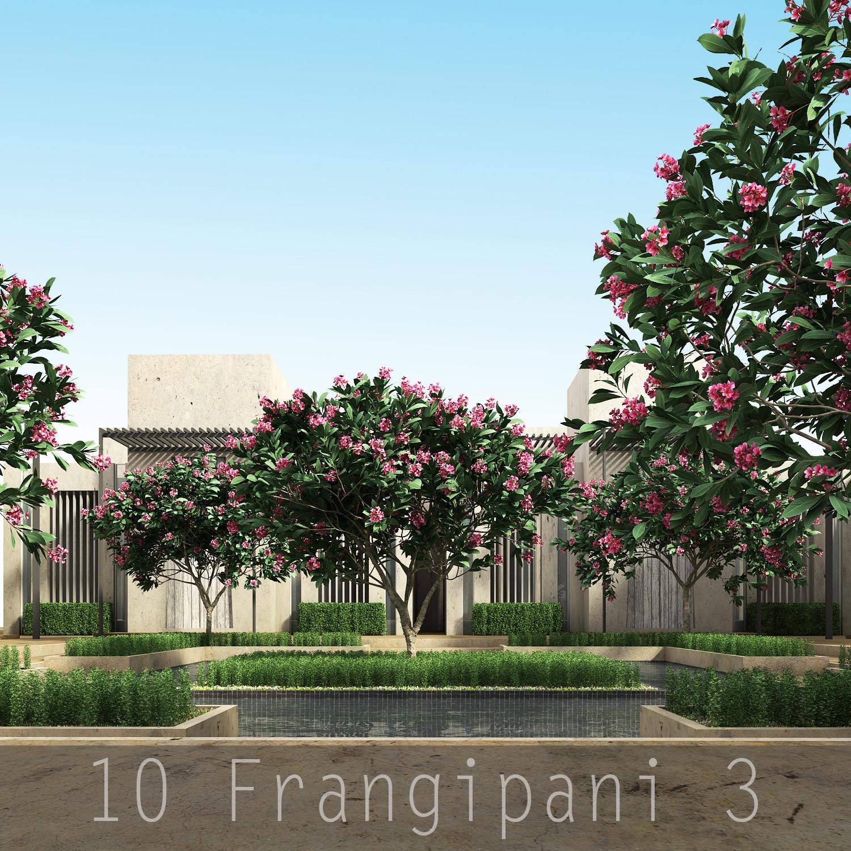 10 Frangipani 3_00.jpg