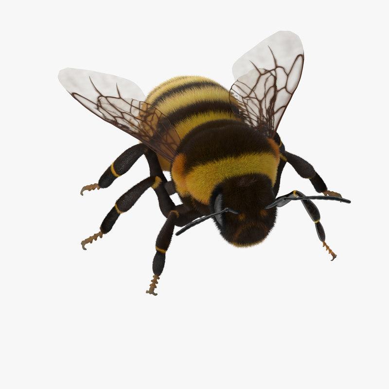 Bumblebee_01_Rig_Thumbnail_Square0000.jpg