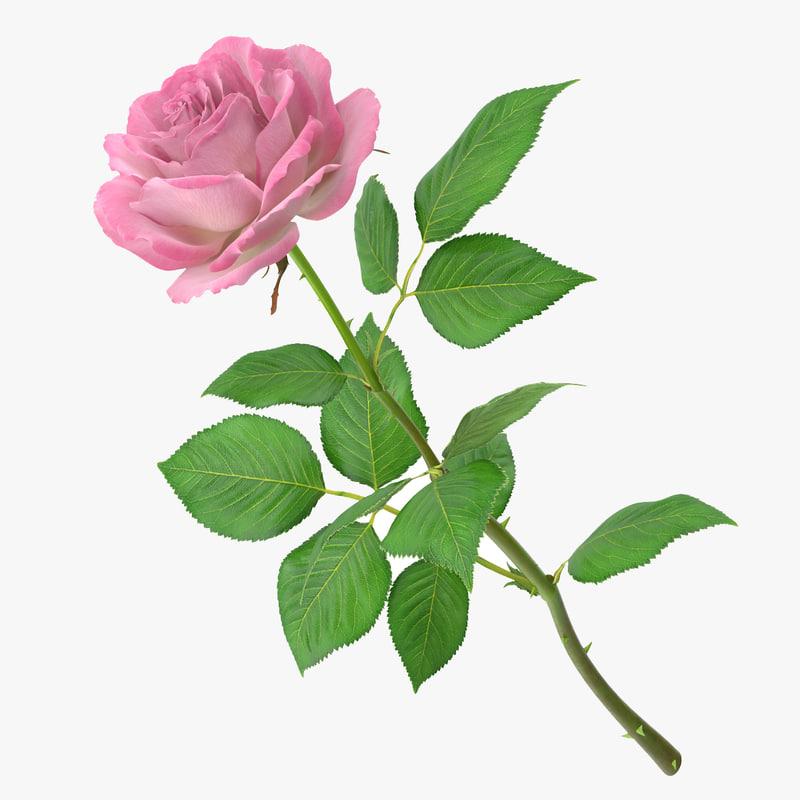 rose 24_1_1_1.jpg