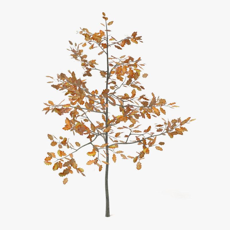 Young Oak(Autumn).jpg