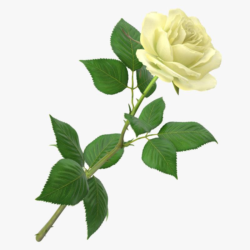 rose 25_1_1_1.jpg