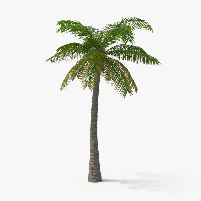 Palm_Tree_02_SQRSignature_0000.jpg