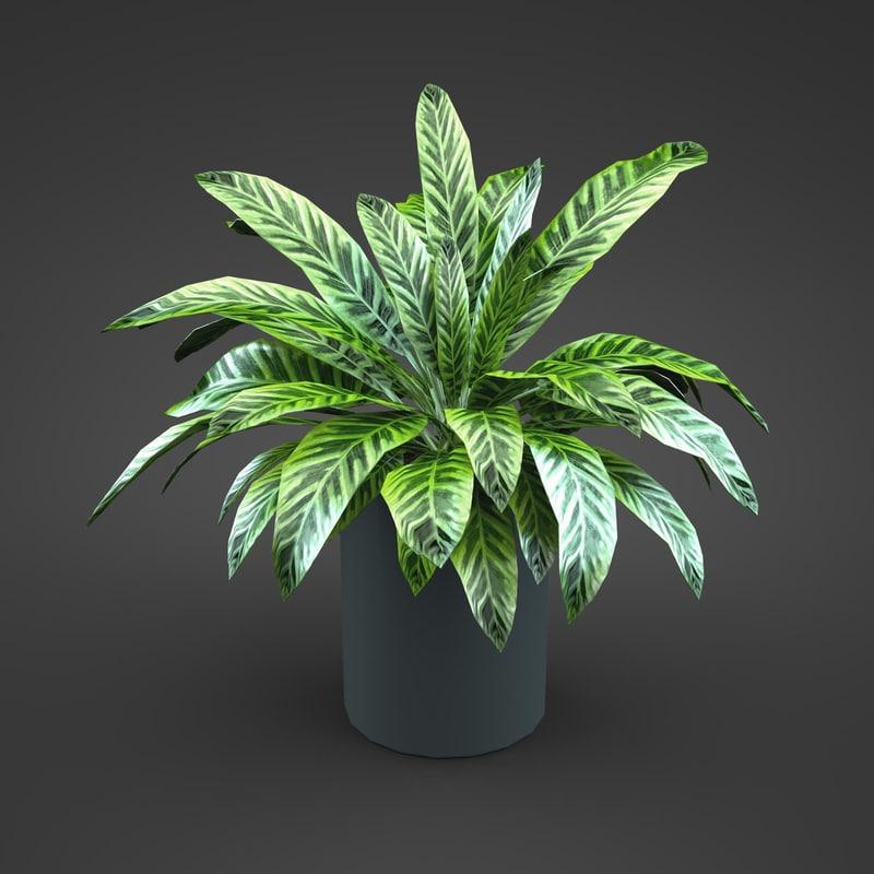 home plant 1.jpg