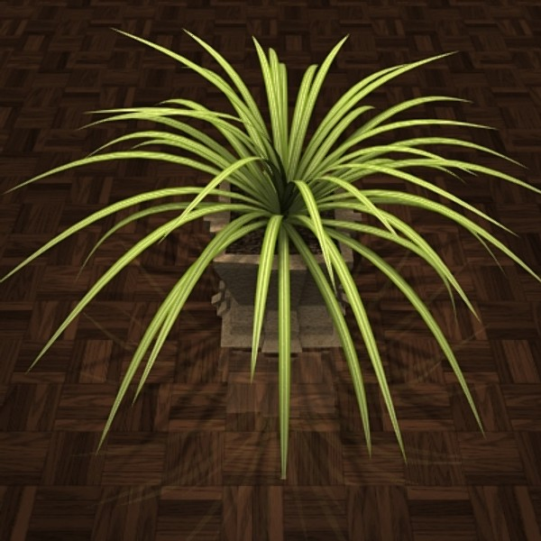 3d model decoratif plant chlorophytum houses - plant Chlorophytum... by POPA_3D